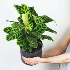 Rośliny przyjazne dla Zwierząt