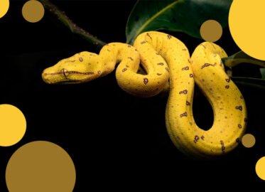 ZooEgzotyka   giełda
